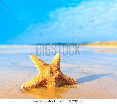 Shell Sea Star