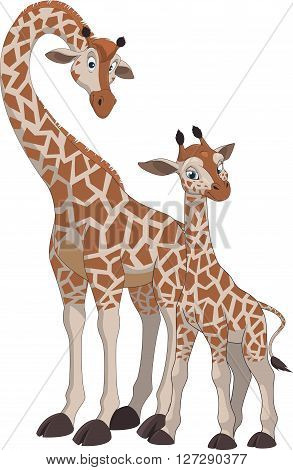 Vector illustration of an adult giraffe and baby giraffe on a white background