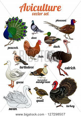 Birds set. Set of poultry. Aviculture. Vector illustration.