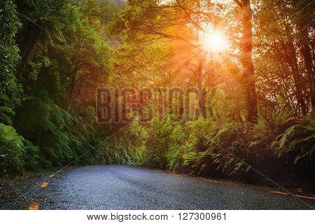 scene of sun rising and moisture fern forest