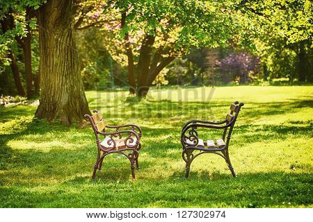 Two Benches on the Grass in the Park