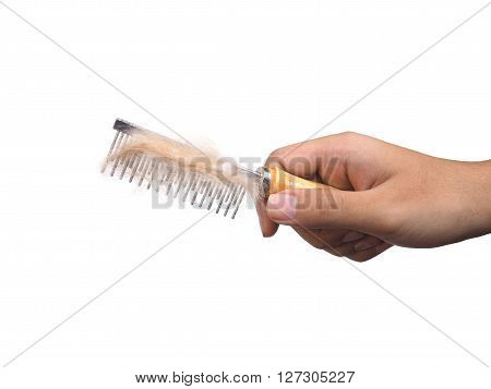 Hand holding wooden comb with metal prongs for grooming pet on white background