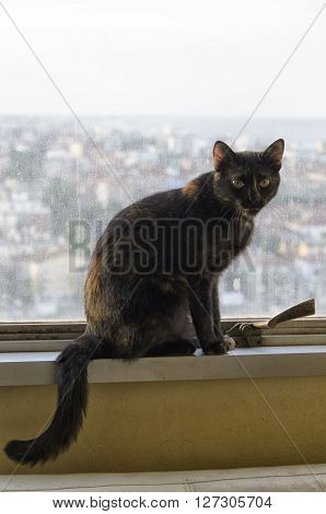 Black cat with townscape in the background