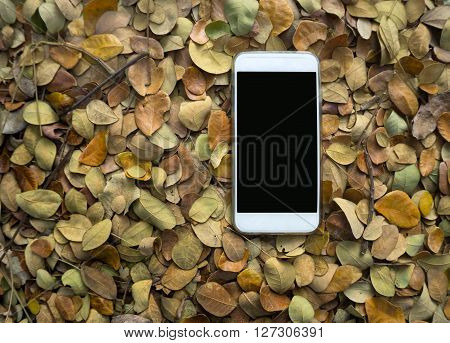 Blank White Smartphone Screen On Dry Leaves