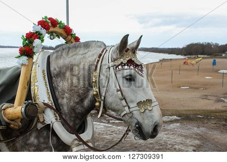 Decorated horse's head. Domestic horses live and work in urban areas.
