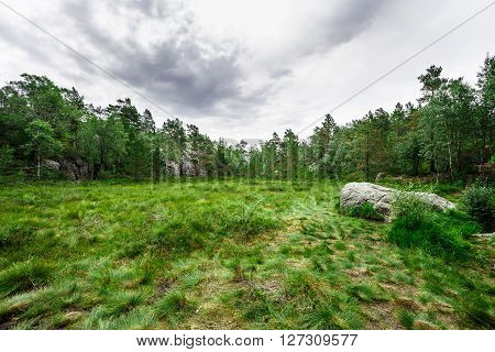 Hiking in a Norwegian forest during a cloudy weather