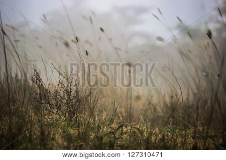 Morning fog (clouds) covering the ground in the Ngorongoro national park (Tanzania)