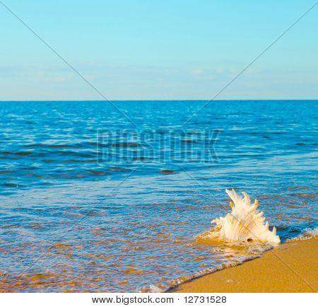 Landscape Beach Concept