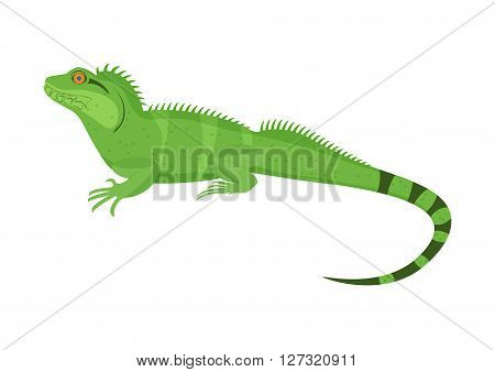Chinese water dragon vector illustration isoladed on a white background