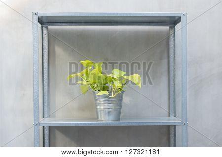 Pothos In Zinc Bucket But On Zinc Shelf