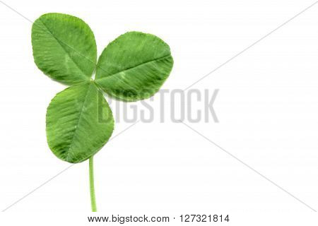 Shamrock With Copy Space