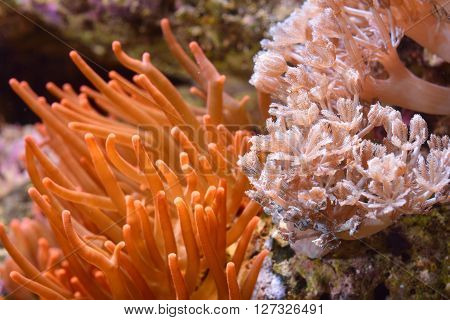 Exotic marine aquarium view with corals and actinia