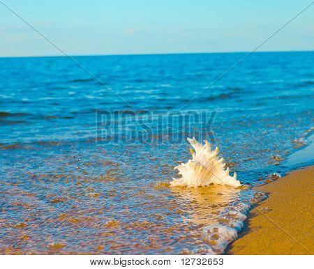 Shell Seascape Beach
