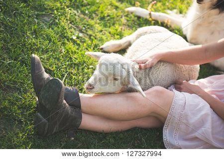 Farmer woman resting outdoor with farm animal. Cute young lamb at her legs. Woman legs in old leather boots.