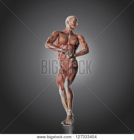 3D render of a male bodybuilder figure with muscle map