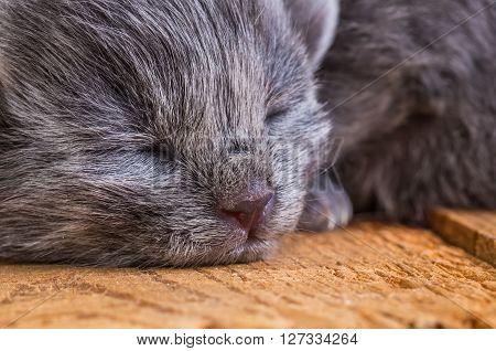 gray blind kitten on a wooden board background
