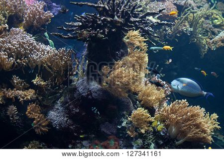 Tropical fishes swimming in the coral reef. Wild life animals.