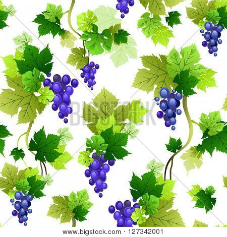Grapes pattern on blue background. The natural design banner,ticket, leaflet and so on. Place for text. Isolated elements.