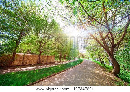 beautiful avenue in to the park