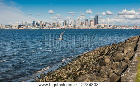 A view of the Seattle skyline with a seagull in the foreground.