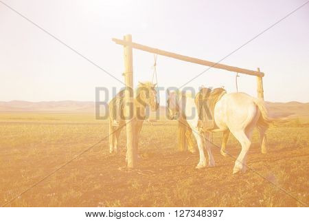 Two Horses Tied Post Together Open Field Beautiful Scenery COncept