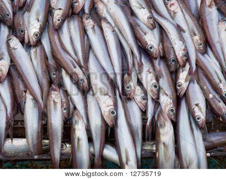 bacaladilla pescados en buque factoría de cubierta