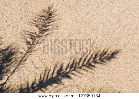 Palm trees cast shadows on the smooth golden sand of a remote tropical island beach