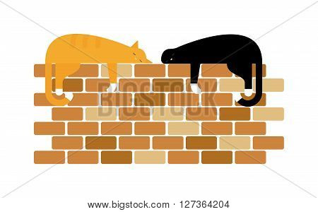 Two cute domestic short hair cats sleeping snuggle on wall. Two fluffy cats gray beautiful kitten and breed scottish-fold two cats. Domestic two cats and two cats friends adorable cute feline.
