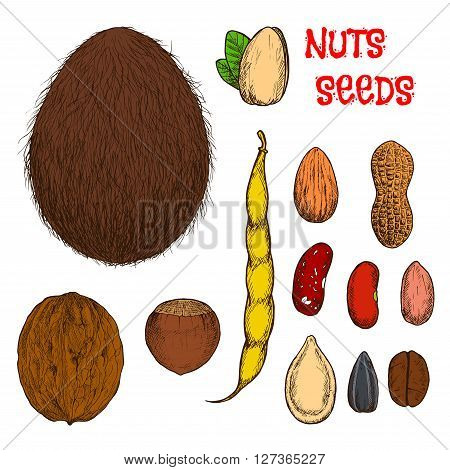 Sweet almond, hazelnut, walnut and pistachio nuts, coconut fruit, roasted coffee, peanuts with shell and common beans with pod, dry pumpkin and sunflower seeds retro stylized colored sketches. Use as healthy food or confectionery design