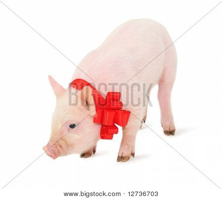 Piglet With A Red Ribbon