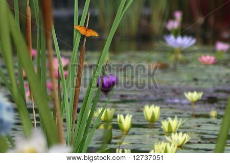 Butterfly and Lily Pond