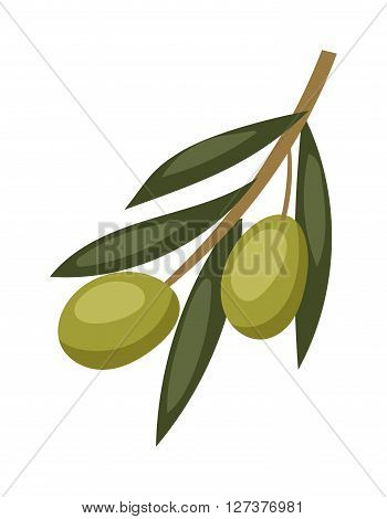 Olive branch with green olives on a white background healthy organic mediterranean fruit vector illustration. Green olive branch and healthy olive branch food. Vegetarian olive branch.