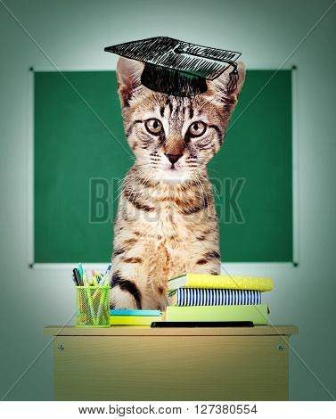 Cat school- funny cat sitting on sits at a school desk.
