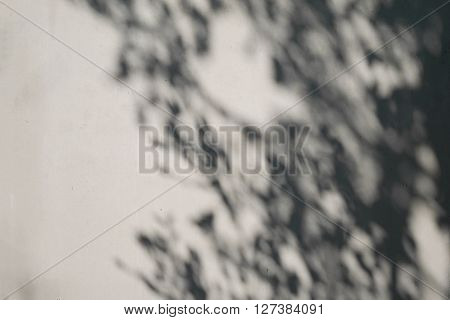 Shadow of tree on plaster concrete wall.