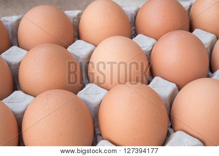 Chicken Egg for raw material food in egg tray