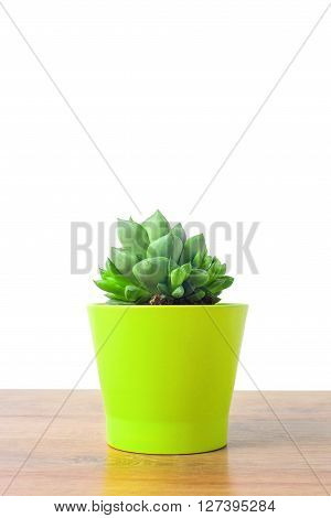 Vintage soft tone with small cactus in a clay pots on a wooden background, Close up of Haworthia asperula, Liliaceae
