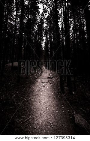 Narrow Path through the dark tall trees in the woods