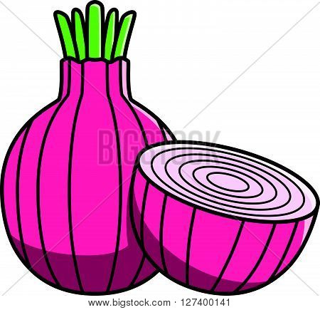 Red onion Vector Illustration .EPS10 editable vector illustration design