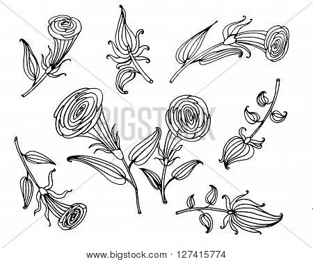 drawing flower elements set collection contour stylish colors eel doodle sketch vector illustration Coloring book