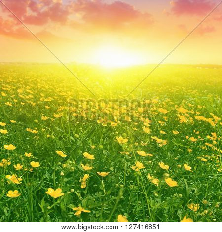 Summer field and colorful sunset.