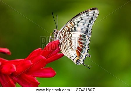 Closeup butterfly on flower blossom