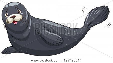 Seal with black skin illustration