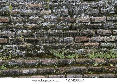 rough brick wall covered with moss and vegetation