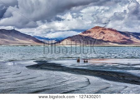Tso Kar - fluctuating moutain salt lake in Himalayas. Rapshu,  Ladakh, Jammu and Kashmir, India