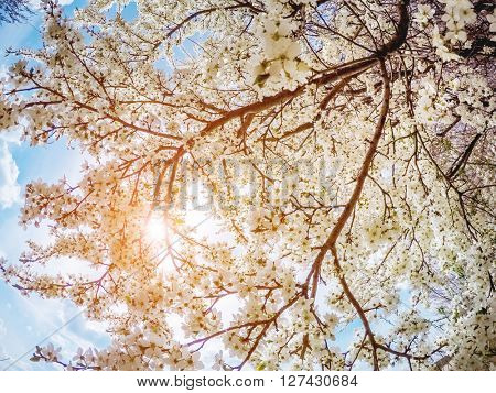 Fantastic apple orchard is illuminated by sunlight. Fruit tree in april. Picturesque and gorgeous scene. Location place Ukraine, Europe. Beauty world. Glowing soft filter effect.