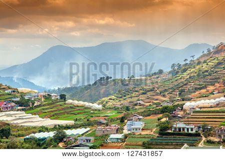 Neighborhood Of Dalat, Vietnam. Rice Fields, Beautiful Landscape.