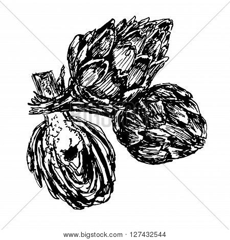 Picture three ripe artichoke, hand drawn, sketch isolate shading ink vector illustration