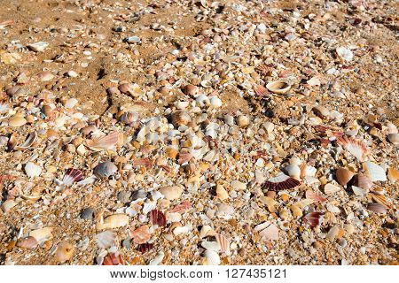 Beach full of sea shells with coral sand as background