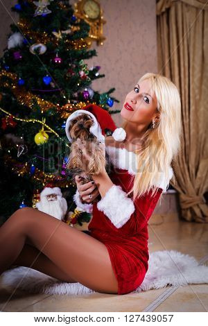 Pretty Christmas Woman With Yorkshire Terrier Near Christmas Tree