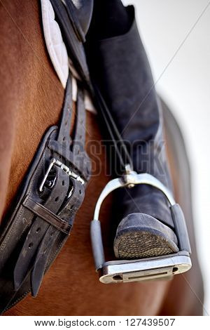 Dressage rider and horse closeup boot in stirrup detail